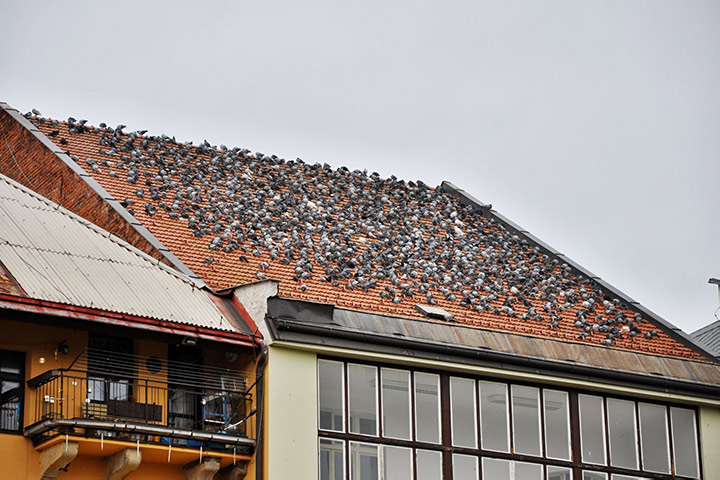 A2B Pest Control are able to install spikes to deter birds from roofs in North Wembley.