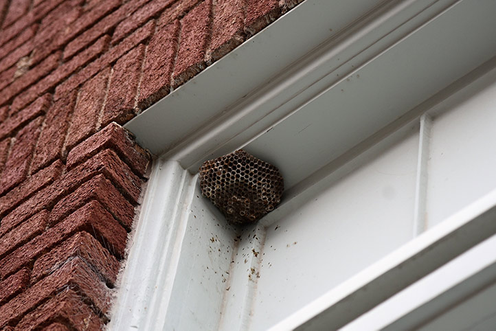 We provide a wasp nest removal service for domestic and commercial properties in North Wembley.